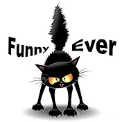Funny Cats Ever