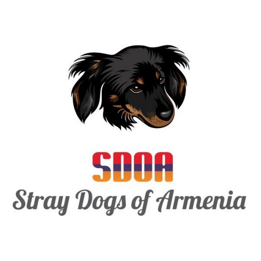 Stray Dogs of Armenia