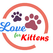 Love for Kittens