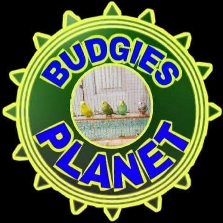 Budgies Planet