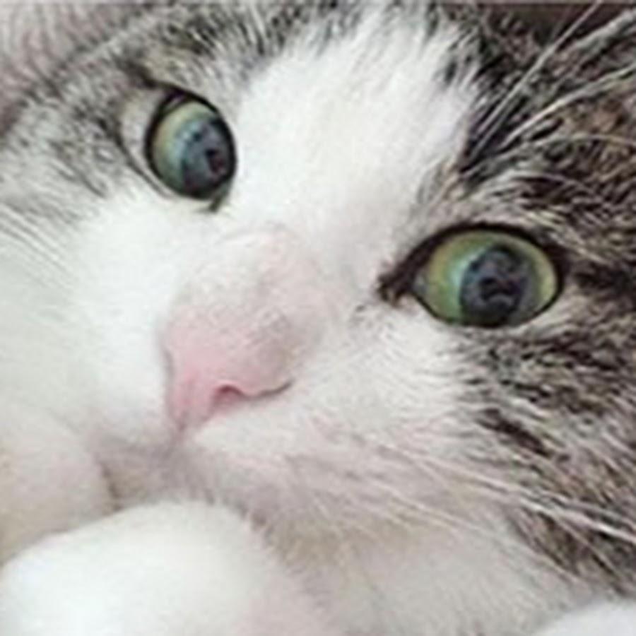 Самые смешные кошки -
