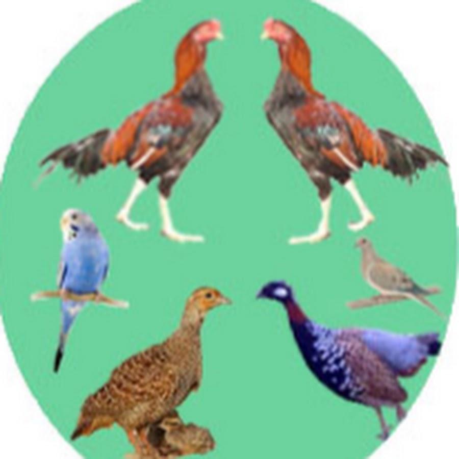All Birds breeding &