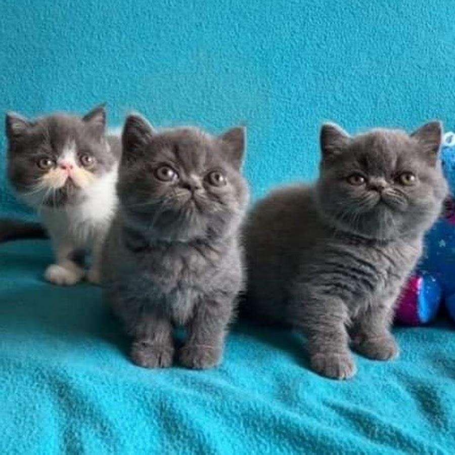 Kittens exotic