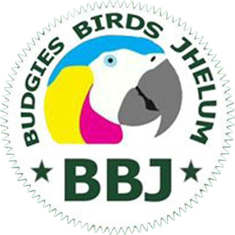 Budgies birds jhelum
