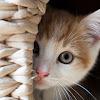Tube China Cats