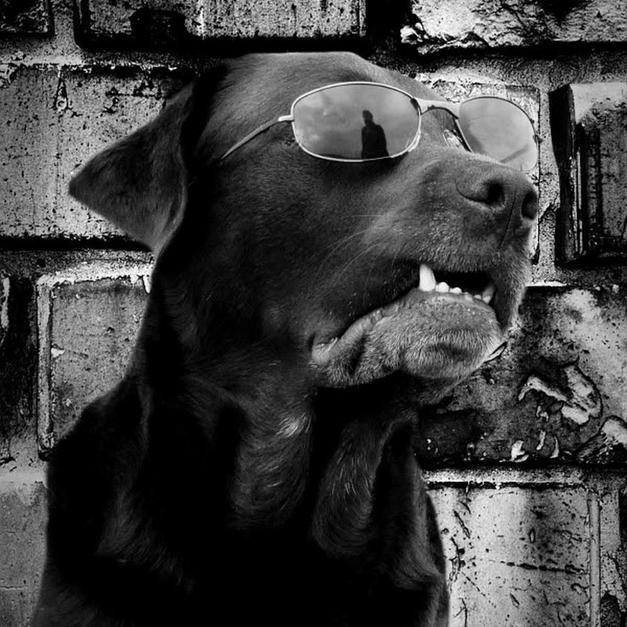 Hundepilot
