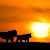Maasai Sightings net worth