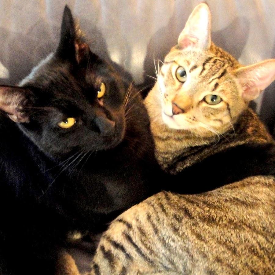 Cute Cats Kwazi and Uli