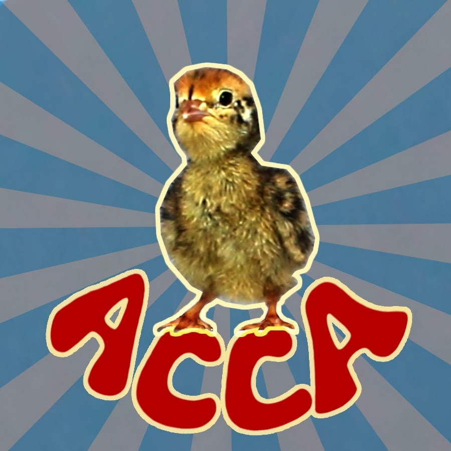 A Chick Called Albert