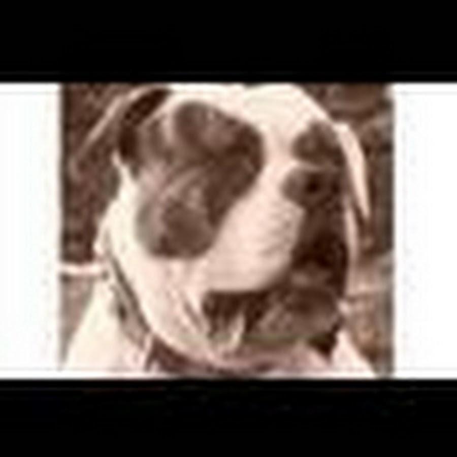BigAmericanBulldogs