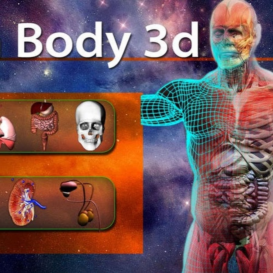 New Anatomy and Physiology Video Logo