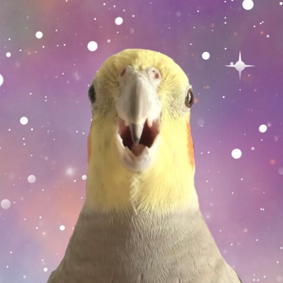 Alex The Honking Bird