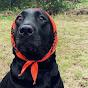 Dog Awesome