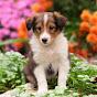 Pups Luv, LLC - Youtube