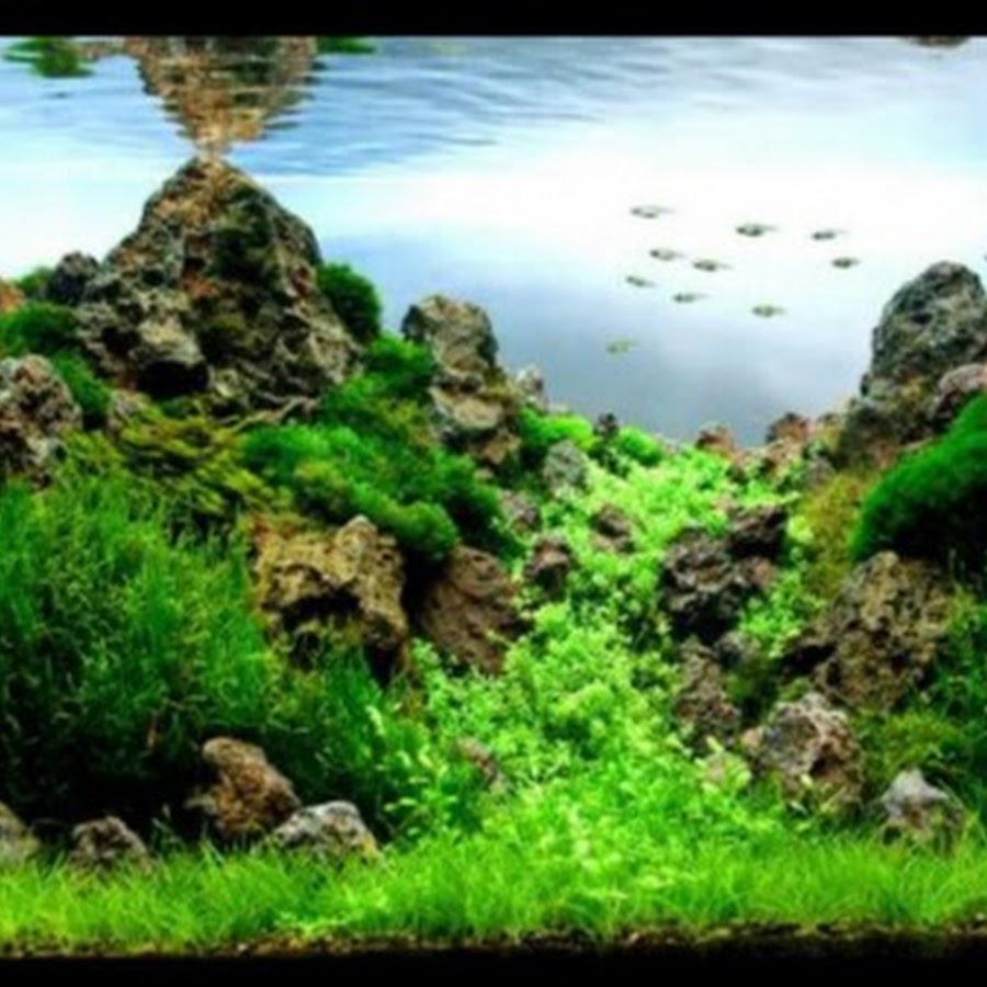 Aquarian Vikas
