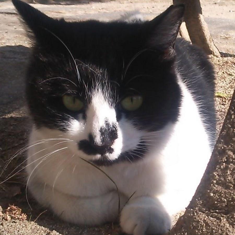 地域猫ちゃんの動画