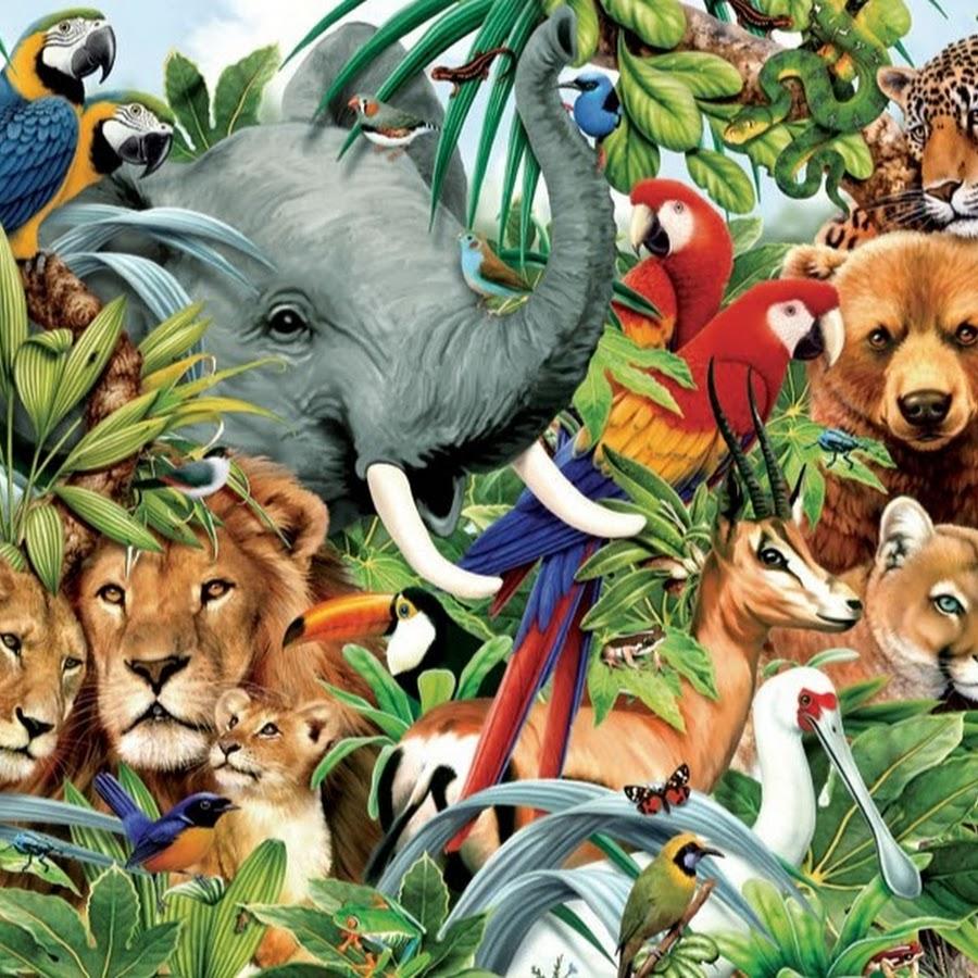 Веб-зоопарк — канал о