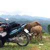 黃寶強囧遊越南