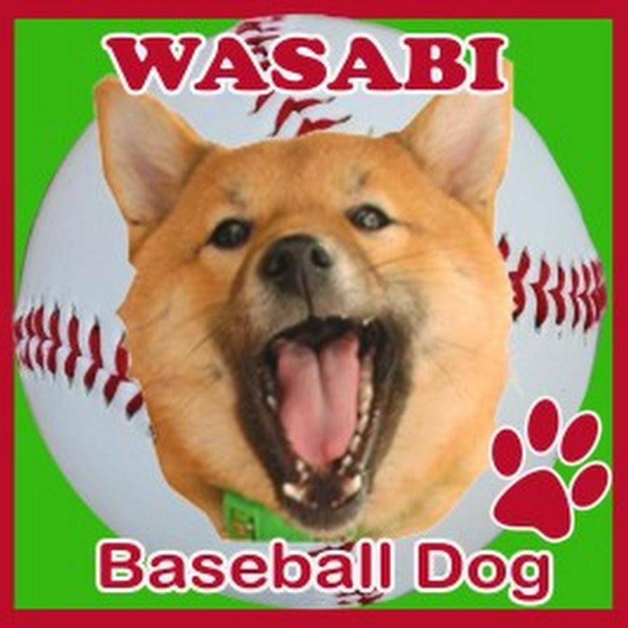 wasabinex