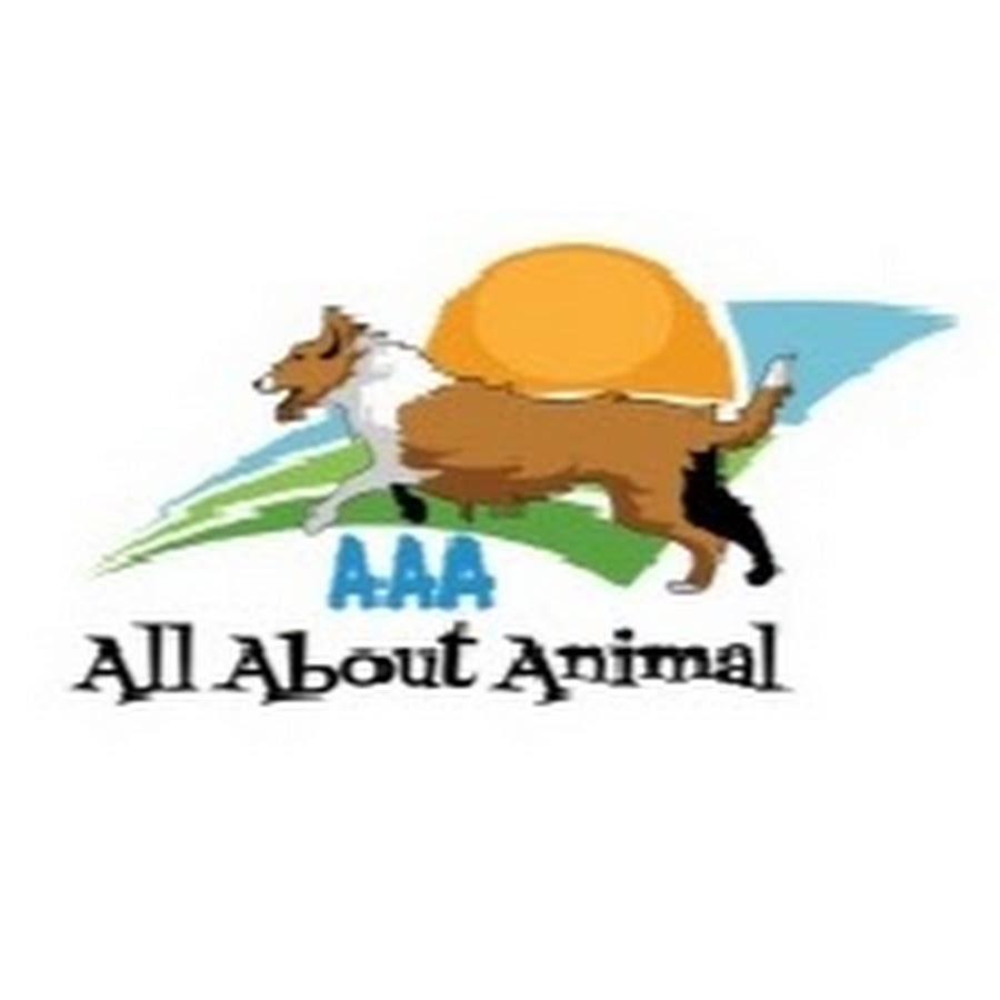 AAA{All About Animal}