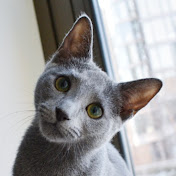 Kat & Cats
