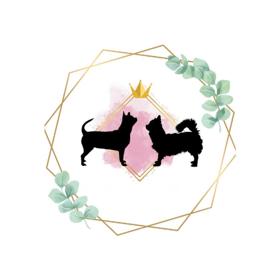 Hodowla Chihuahua &