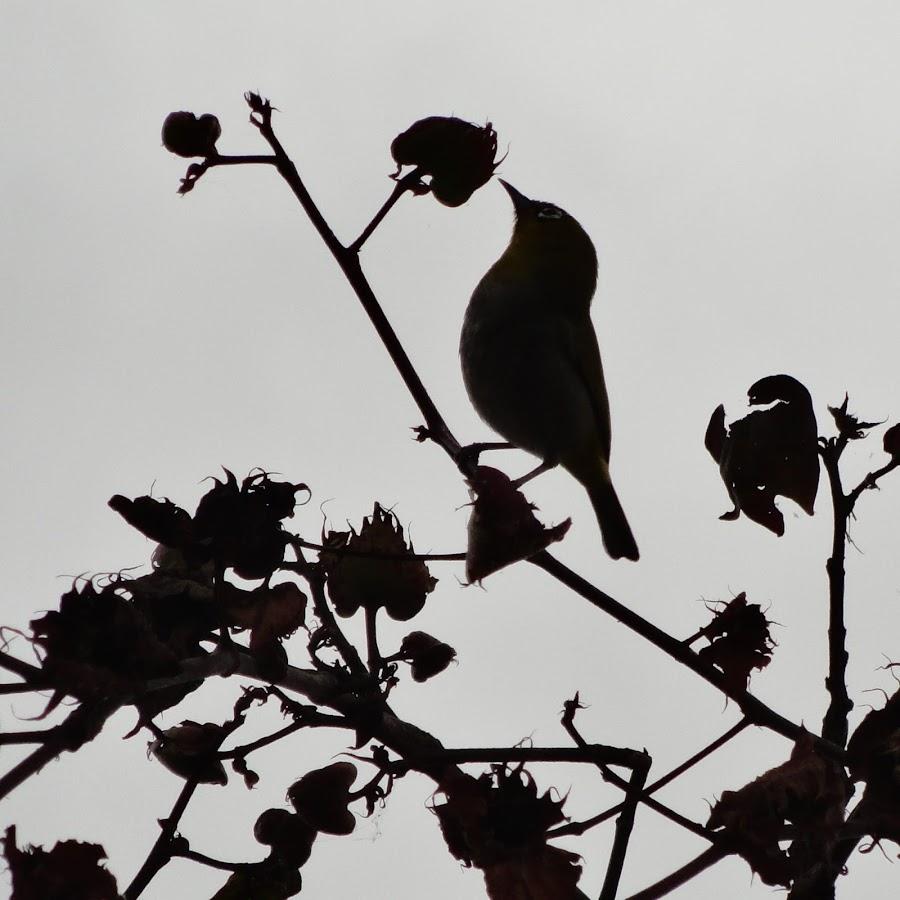 nature admirer