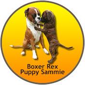 BoxerRex net worth