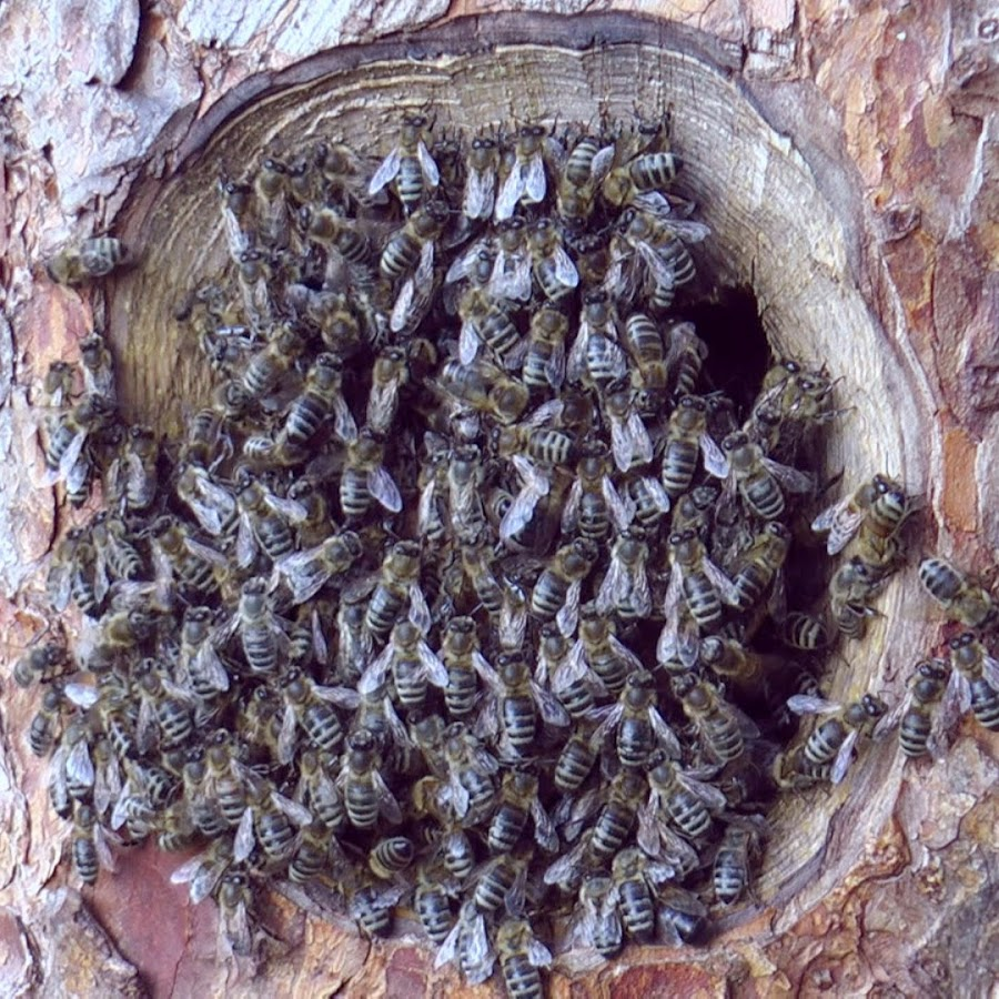 Tree Beekeeping