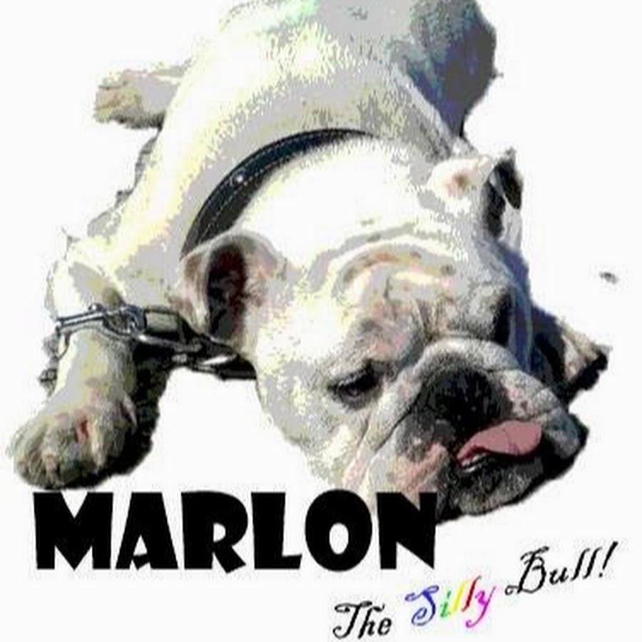 English Bulldog Marlon