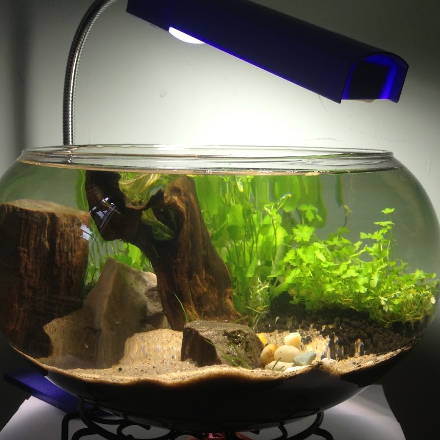 aquarium & fish FAN