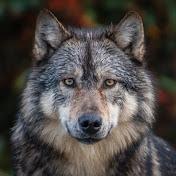 John Waltmans net worth