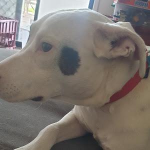 Darkbin180