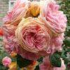 Roses - Tatiana Sibgatulina