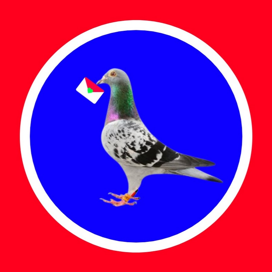 Pigeons Market. Net