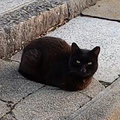 Osaka BlackCat