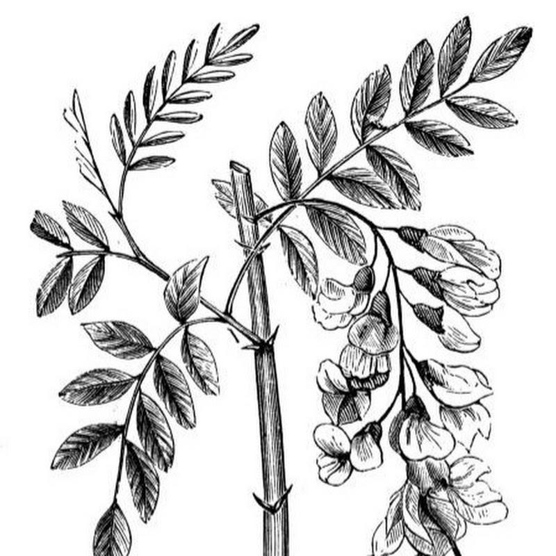 Locust tree garden (locust-tree-garden)