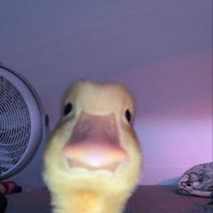 Mystic OP