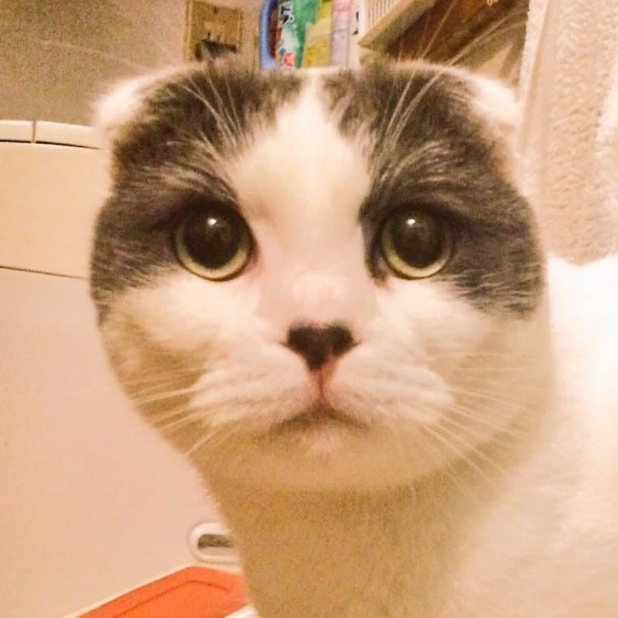 猫動画チャンネルまこと