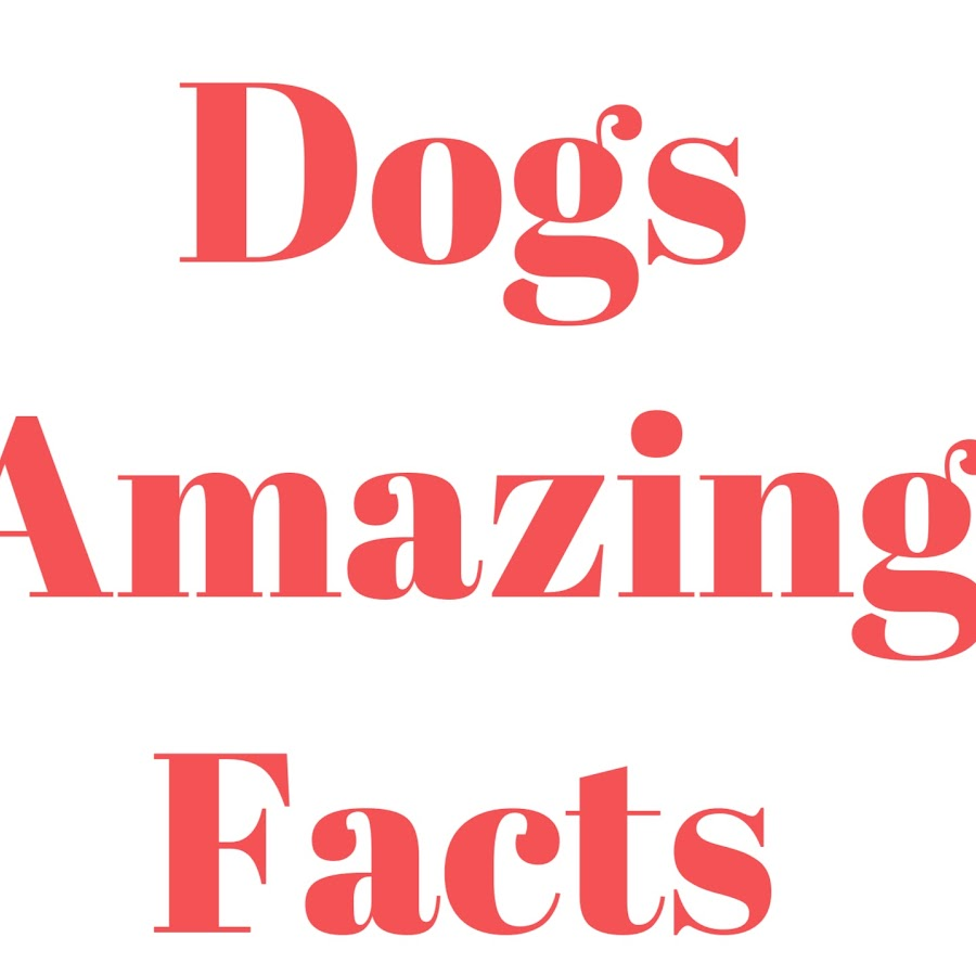 Dogs Amazing Facts