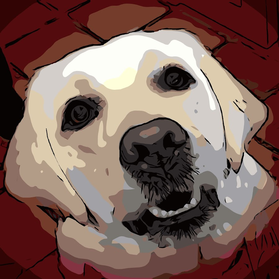 Andie the Lab