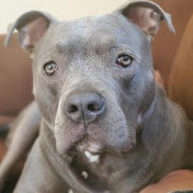 Zeusy The Pitty