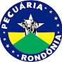 PECUÁRIA RONDÔNIA