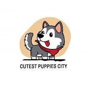 Cutest Puppies City