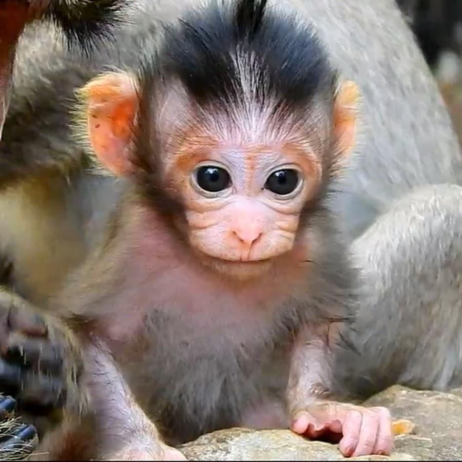 Like Monkey