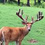 Deer Farming - Youtube