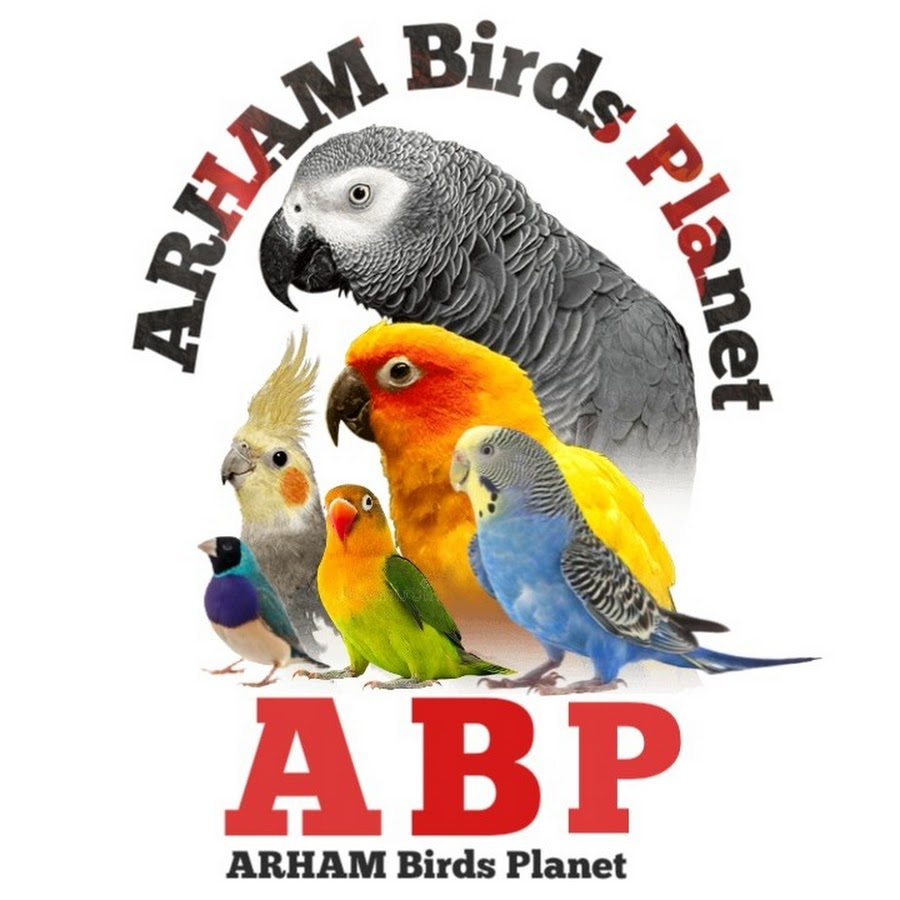 Arham's Parrots Kingdom