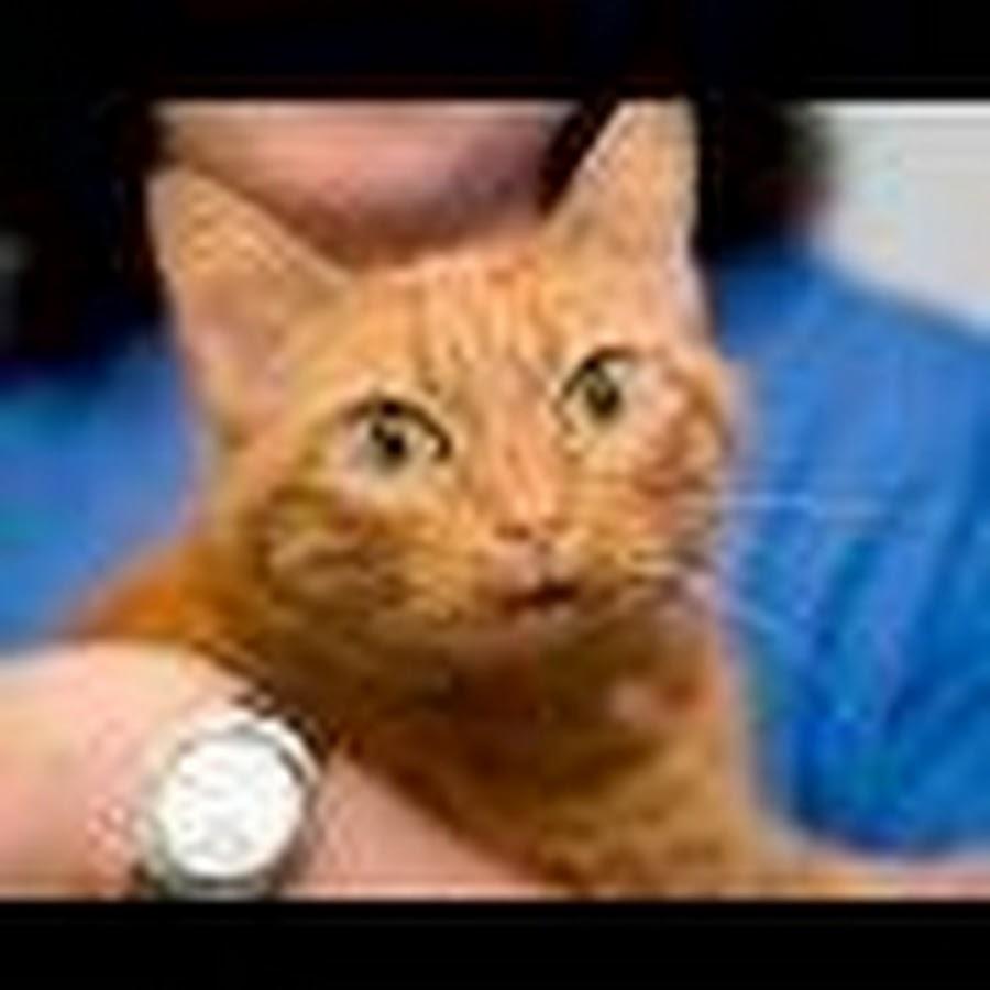 catswhiskersvet