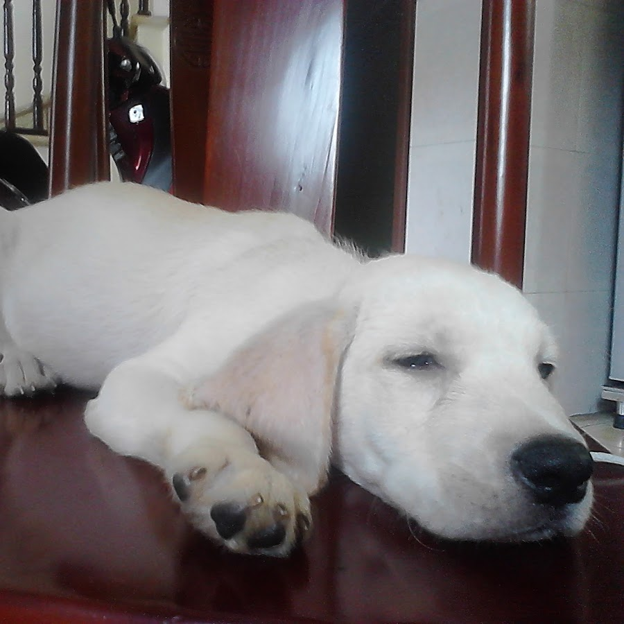Dog Breed Giving Birth