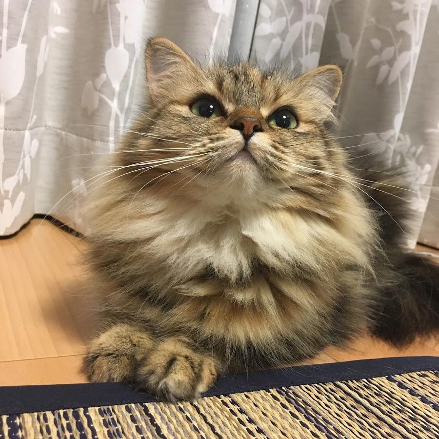 猫ときどきうさぎ